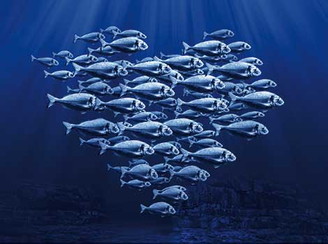 msc-fische im Fischrestaurant